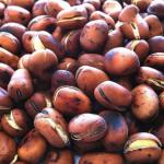 坂の上の雲で豆をよく食べていた秋山真之 実際にもそうだった!?