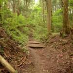 真田幸村の妻 竹林院 彼女の生涯は英雄を支えた内助の功だった!?