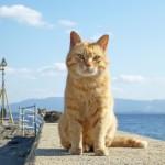戦国一の愛猫家!? 島津義弘は朝鮮出兵に猫を連れて行ったらしい!?